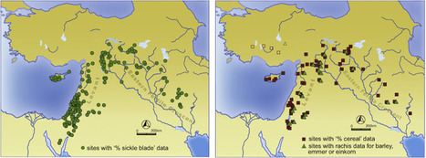 Narrowing the harvest: Increasing sickle investment and the rise of domesticated cereal agriculture in the Fertile Crescent | Rice origins and cultural history | Scoop.it