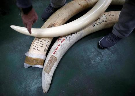 Yahoo Japan defies calls to rethink ivory sales as Yahoo Inc CEO weighs in | Biodiversité | Scoop.it