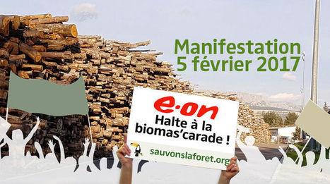 Marche pour la santé publique et l'environnement - Sauvons la Forêt | Actualités écologie | Scoop.it