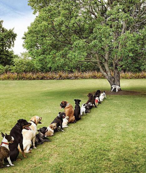 Graves problemas causados por la deforestación. | TIC JSL | Scoop.it