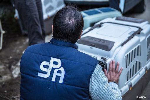 Trafic d'animaux : la SPA fait tomber les réseaux | Société Protectrice des Animaux