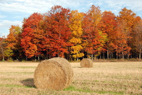 Door County, WI ablaze with color, activities in fall | The Miracle of Fall | Scoop.it