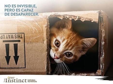 Alimentación natural para perros y gatos - ElBlogVerde.com | Agroindustria Sostenible | Scoop.it
