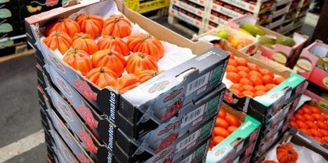 La tomate cœur de bœuf, une supercherie qu'il faut dénoncer | Développement durable & Environnement | Scoop.it