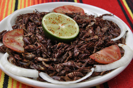 7 Insects You'll Be Eating in the Future | eating insects = win | Scoop.it
