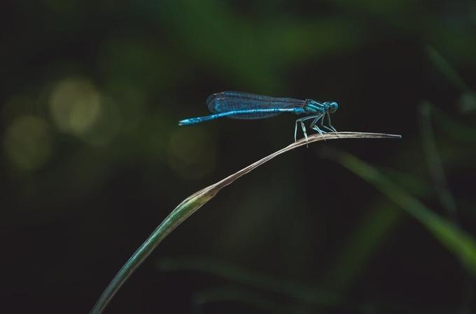 Conservation de la biodiversité: trois raisons degarder espoir