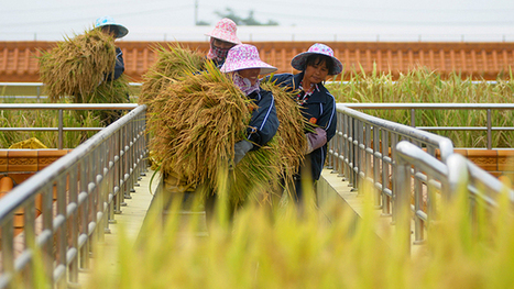 End of the line: GMO production in China halted | GMOs | Scoop.it