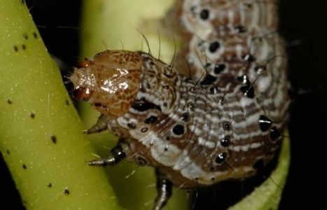 Transgenic Crops: Multiple Toxins No Panacea for Pest Control | UANews | CALS in the News | Scoop.it