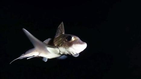 Vidéo Full HD | Norvège - Plongée de nuit avec les créatures des fjords ! | Plongeurs.TV | Scoop.it