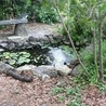 Landscape designer in North Palm Beach   Sarahs Yard and Garden