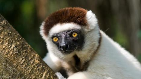 Madagascar: une conférence sur la disparition d'animaux uniques | Biodiversité & Relations Homme - Nature - Environnement : Un Scoop.it du Muséum de Toulouse | Scoop.it