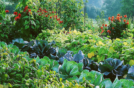 Chou primeur, précieux au printemps | Potager & Jardin | Scoop.it