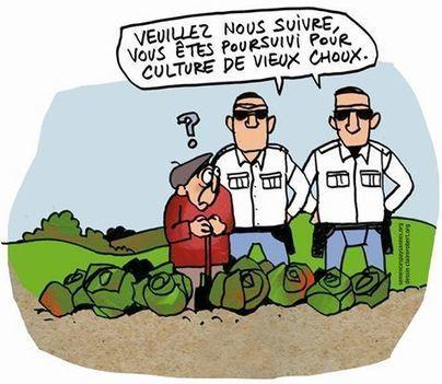 Les semences paysannes, arme efficace contre les lobbies agricoles et le Pouvoir | Environnement et développement durable, mode de vie soutenable | Scoop.it