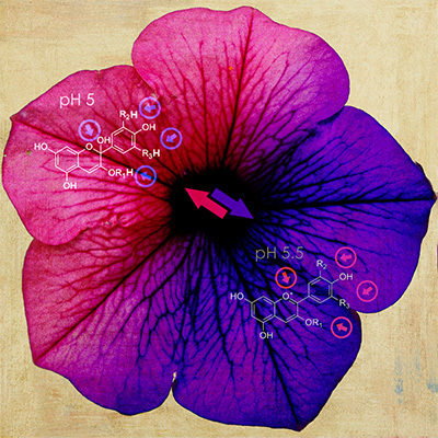 Changing the World with Color Changing Flowers | TECHNOLOGY=SCIENCE=CREATIVITY | Scoop.it