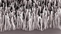 Forêt de nanotubes pour énergie verte | Post-Sapiens, les êtres technologiques | Scoop.it