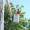Campos Greenview Tree Service
