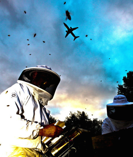 Airports all over the World are turning into Giant Bee Hives | Bees and Honey | Scoop.it