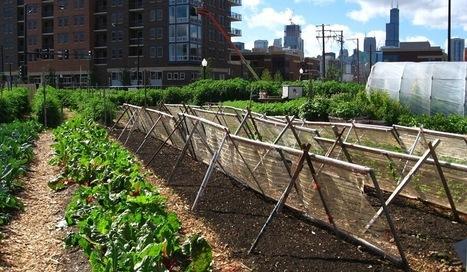 Agriculture urbaine: des enjeux écologiques, économiques et sociaux | Agriculture urbaine et rooftop | Scoop.it
