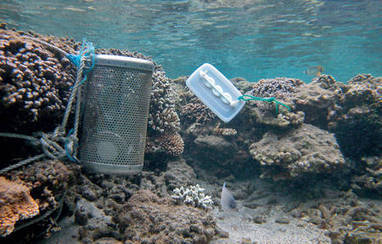 Des moules surveillent le pollution chimique en Méditerranée | santé et protection sociale | Scoop.it