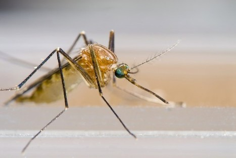 Why Mosquitoes Can't Fly in Fog | EduTech Chat | Scoop.it