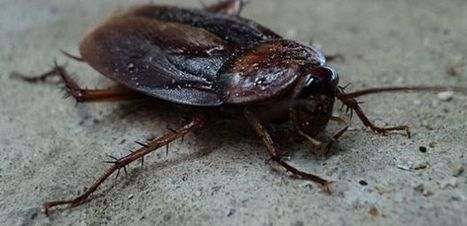 UA Pest Control Experts to Create Nationwide Guidelines for Schools   UANews   CALS in the News   Scoop.it