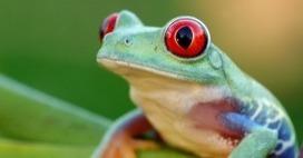 Apa Itu Hewan Amfibi In Kumpulan Artikel Unik Dan Menarik Scoop It