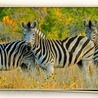 South African Safari Holidays
