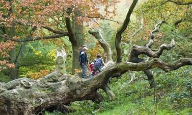 Four out of five UK children 'not connected to nature' - The Guardian   Heal the world   Scoop.it