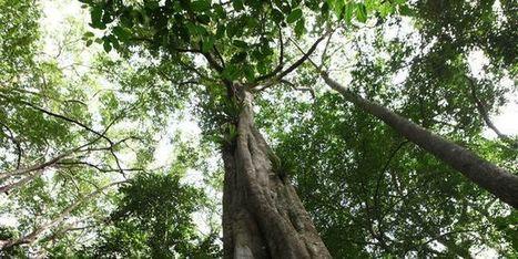 Le monde des forêts sauvages recule rapidement | Options Futurs Rio+20 | Scoop.it