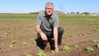 YCEDA 'hot shot teams' seek faster solutions for desert agriculture | Western Farm Press | CALS in the News | Scoop.it