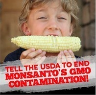 Tell the USDA to End Monsanto's GMO Contamination of Organics! Coexistence is Contamination! | Plant Based Nutrition | Scoop.it