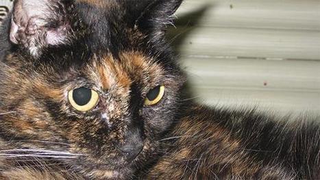 Le chat le plus vieux du monde a fêté ses 27 ans | CaniCatNews-actualité | Scoop.it