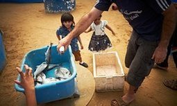 The fish farmers hoping to end Gaza's reliance on Israeli imports | Development Economics | Scoop.it