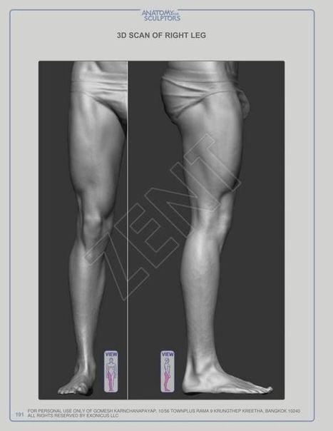 Anatomy for sculptors pdf e books 19 newstola anatomy for sculptors pdf e books 19 fandeluxe Choice Image