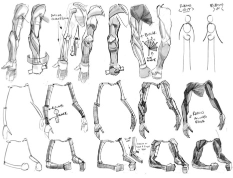 Arms Drawing Reference Guide | Drawing Referenc...