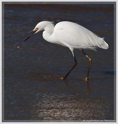 Plan and Time your Nature Photography Outing | Everything Photographic | Scoop.it