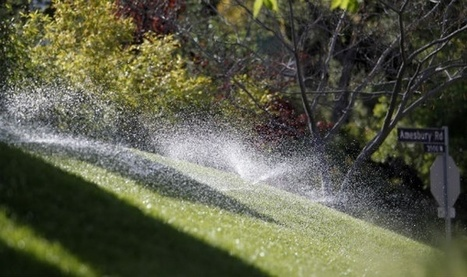 Drought Policy Of the Day: Get Paid to Kill Your Lawn | The EcoPlum Daily | Scoop.it