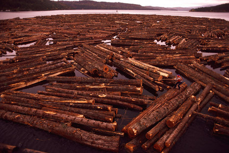 Timber Industry Begins Rebound According to NCREIF | Timberland Investment | Scoop.it