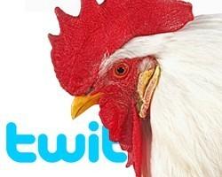 Twitter Como convertirse en el gallo mas importante del gallinero | Antonio Galvez | Scoop.it