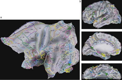 33rd Square | The Brain's Visual Perception Areas Mapped In Breakthrough Study | leapmind | Scoop.it