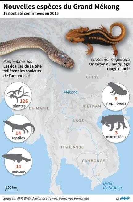 Grand Mékong: 163 nouvelles espèces d'animaux découvertes en 2015