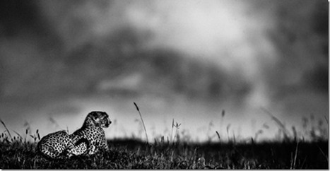 The Family Album of Wild Africa | Photography Tips & Tutorials | Scoop.it