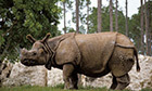 Cost of saving endangered species £50bn a year, say experts | Nature's Bounty | Scoop.it