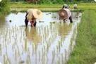 Droit du travail et protection des travailleurs dans les pays émergents | Dialogue Social | Scoop.it
