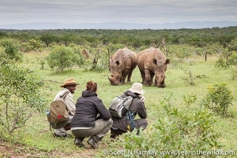 Swaziland showing Africa how to save rhinos | What's Happening to Africa's Rhino? | Scoop.it