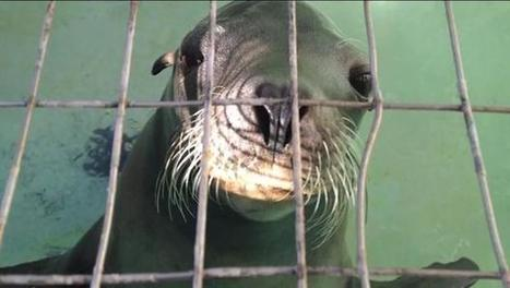 Time for #MorroBay #Aquarium to #close, say conservation groups | Rescue our Ocean's & it's species from Man's Pollution! | Scoop.it