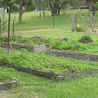 Landscape Contractors
