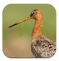 Apps voor (Speciaal) Onderwijs - App Vogels in NL, gratis | Apps en digibord | Scoop.it
