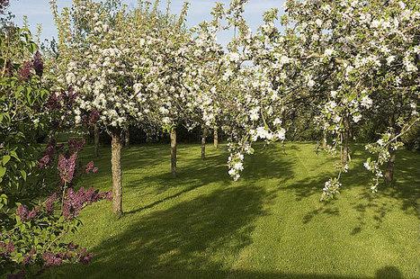 Nos trucs pour protéger vos récoltes au verger | jardins et développement durable | Scoop.it