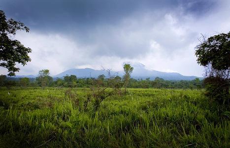 Les Virungas menacés par l'exploitation pétrolière ?   Virunga - WWF   Scoop.it